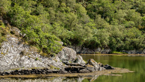 Saving Argyll's Rainforest