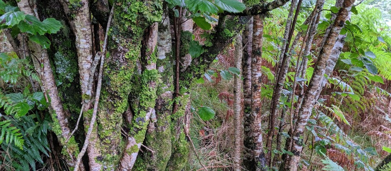 5 places to see rainforest in Argyll